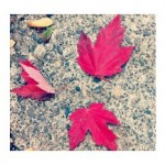 autumn instagram challenge for moms